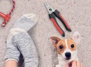 Tijeras para uñas de perros y gatos en Cuchillalia