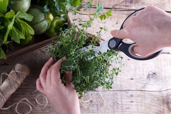 Tijeras cortando hierbas verdes